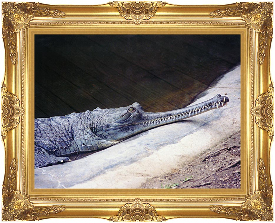 Brandie Newmon Gharial Crocodile with Majestic Gold Frame