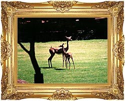 Brandie Newmon Gerenuk Antelopes canvas with Majestic Gold frame