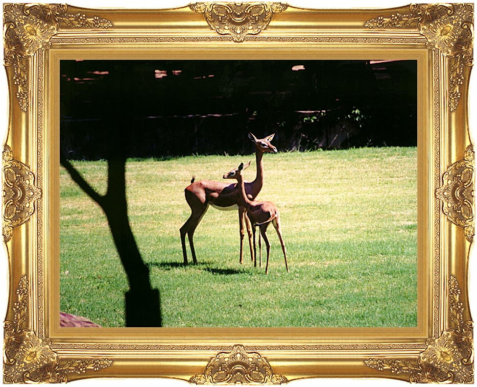 Brandie Newmon Gerenuk Antelopes with Majestic Gold Frame