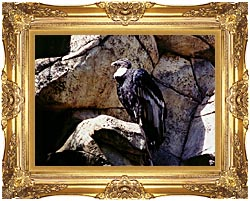 Brandie Newmon California Condor canvas with Majestic Gold frame
