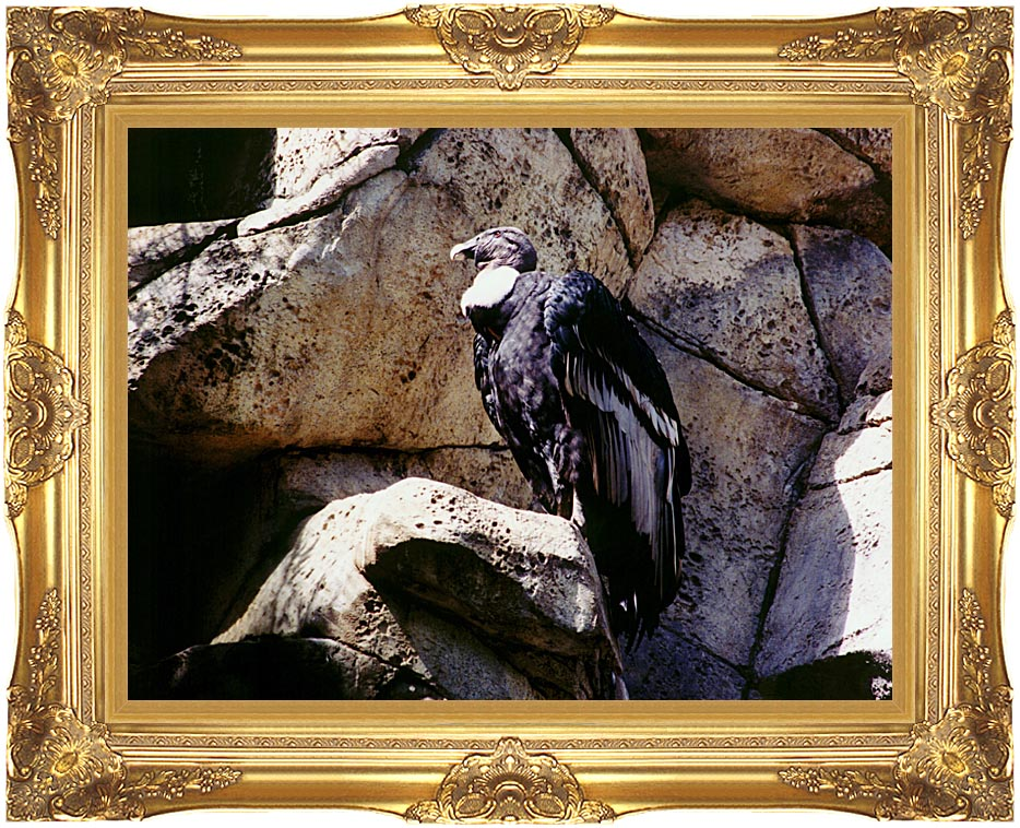 Brandie Newmon California Condor with Majestic Gold Frame