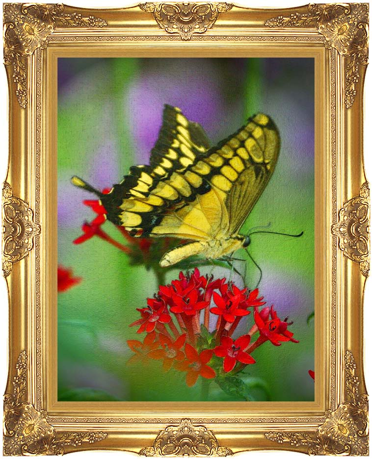 Brandie Newmon Yellow and Black Butterfly with Majestic Gold Frame