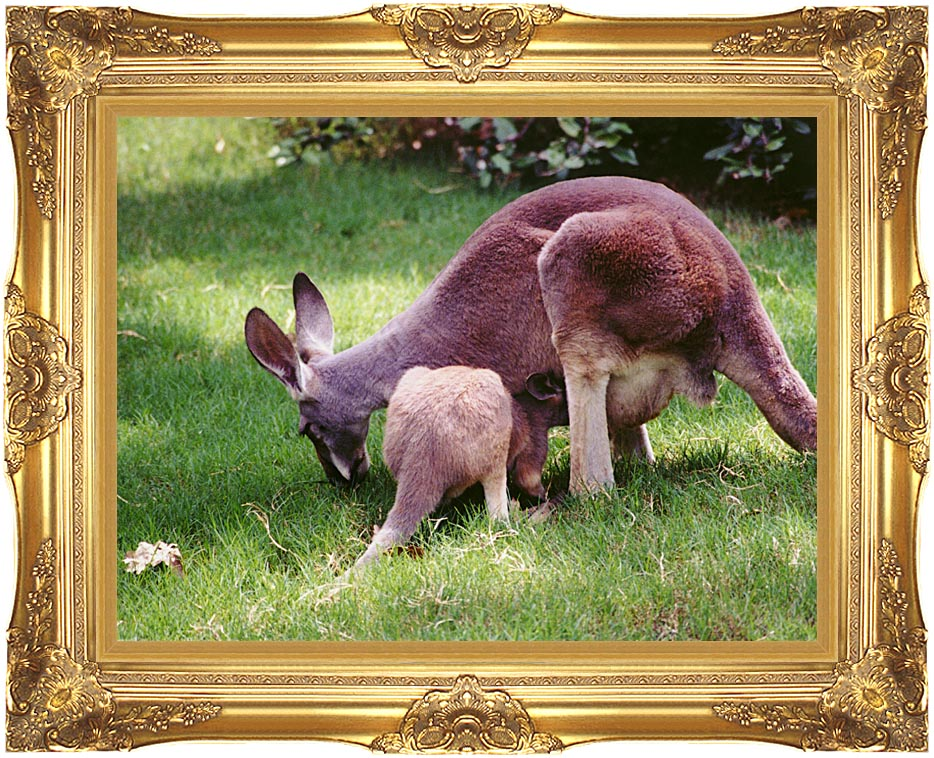 Brandie Newmon Wallaby Mother and Baby with Majestic Gold Frame