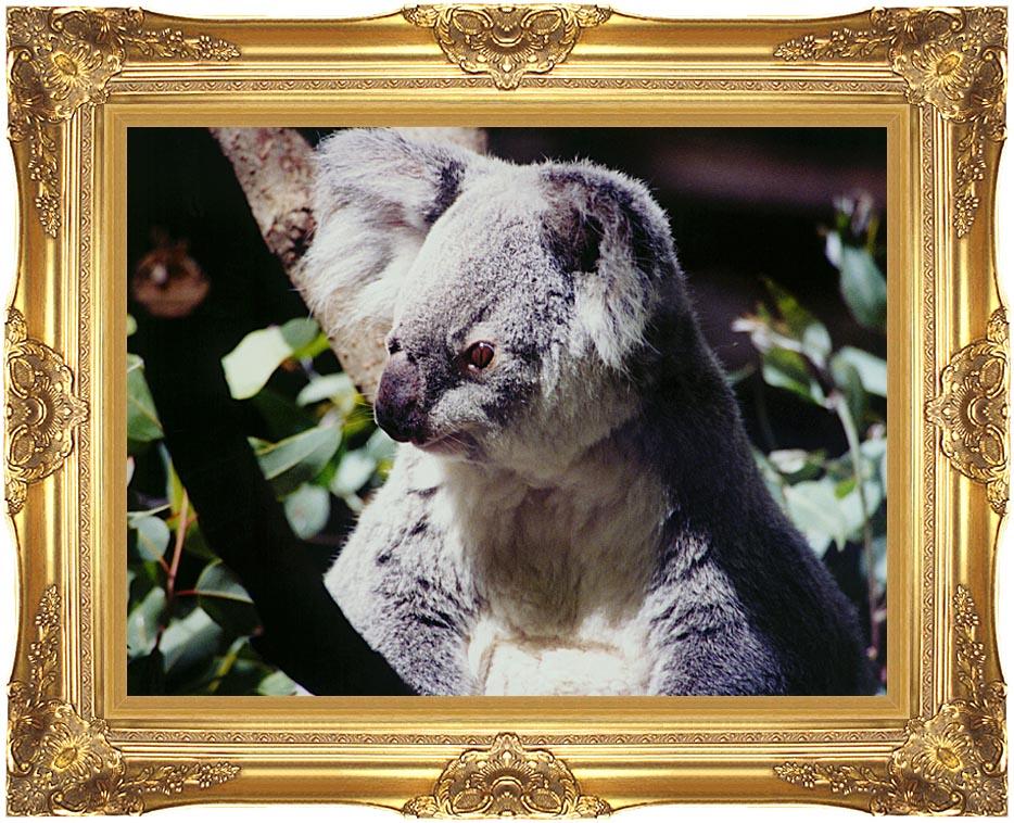 Brandie Newmon Koala Smiling with Majestic Gold Frame