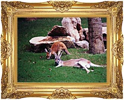 Brandie Newmon Kangaroo With Baby canvas with Majestic Gold frame