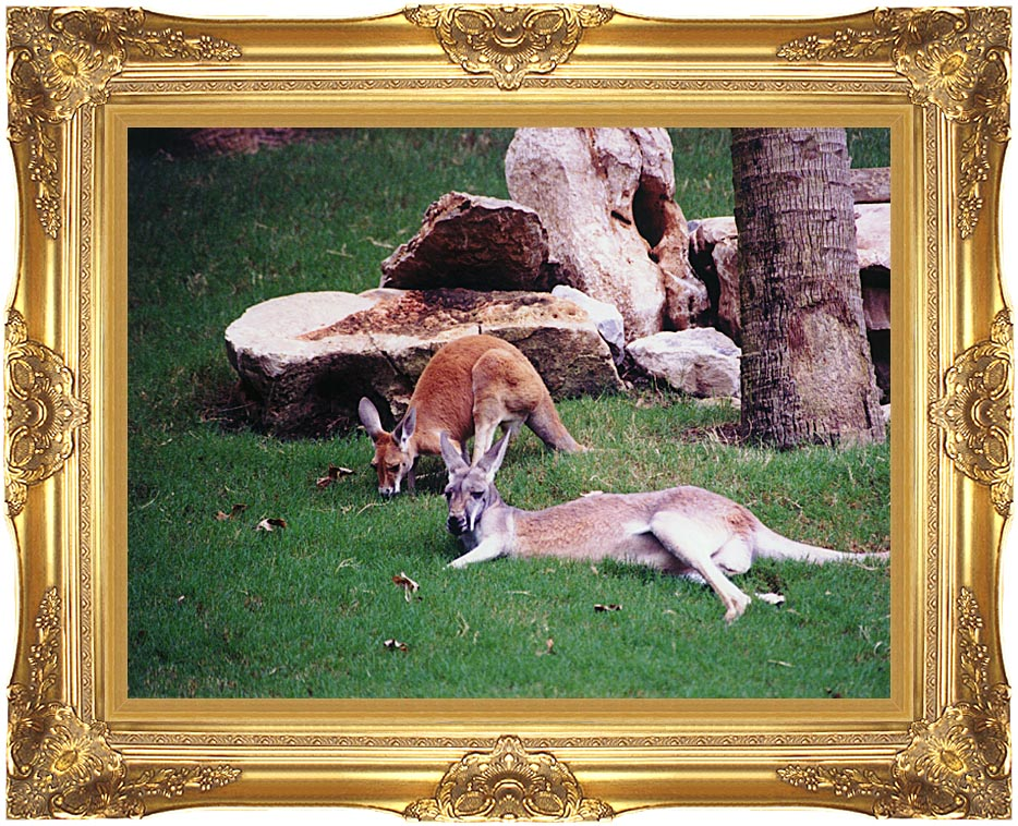 Brandie Newmon Kangaroo with Baby with Majestic Gold Frame