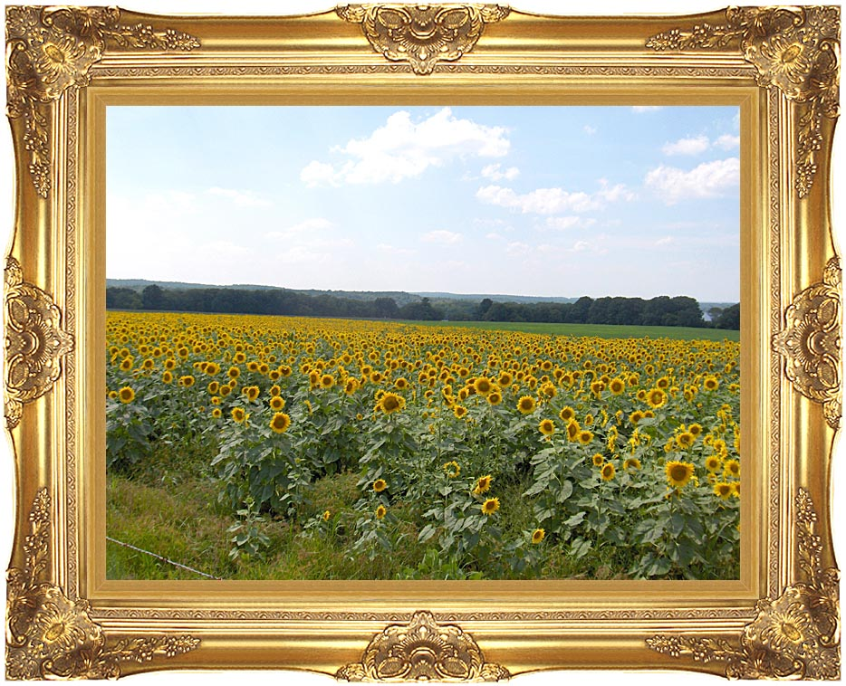 Brandie Newmon Farm with Sunflowers with Majestic Gold Frame