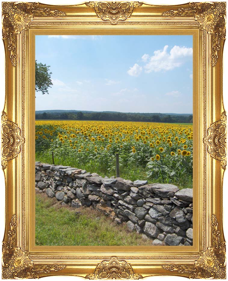 Brandie Newmon New England Sunflowers with Majestic Gold Frame