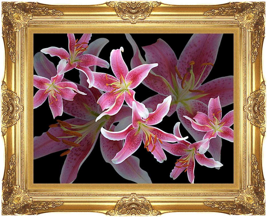 Brandie Newmon Oriental Lilies with Majestic Gold Frame