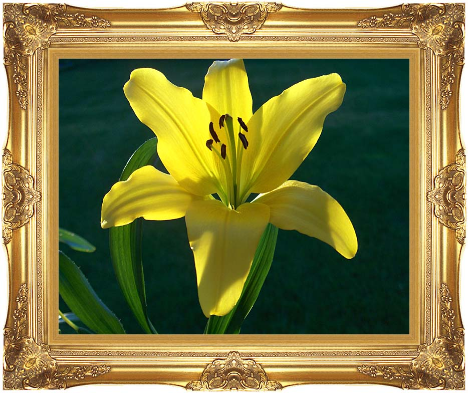 Brandie Newmon Yellow Asiatic Lily with Majestic Gold Frame