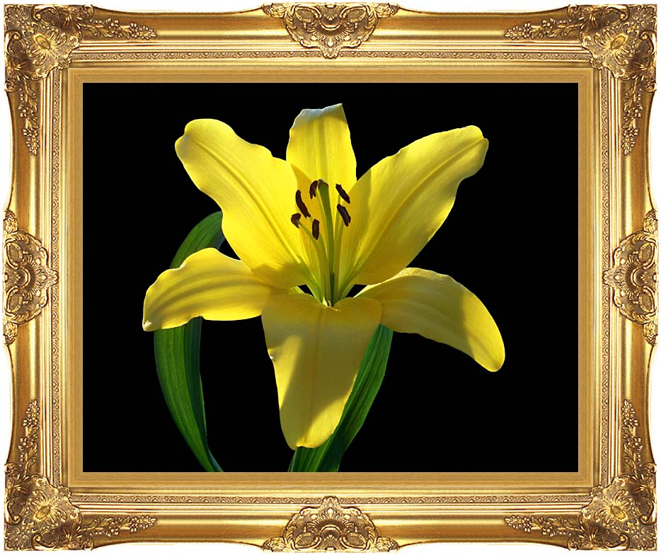 Brandie Newmon Asiatic Lily with Majestic Gold Frame