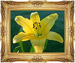 Brandie Newmon Yellow Lily canvas with Majestic Gold frame