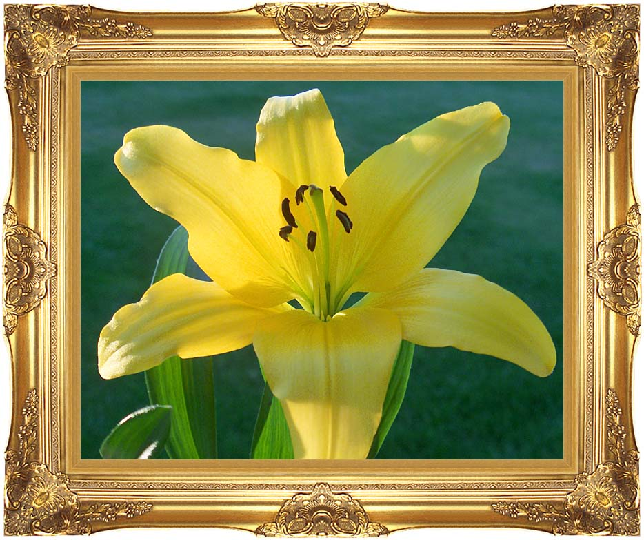 Brandie Newmon Yellow Lily with Majestic Gold Frame