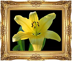 Brandie Newmon Yellow Lily Flower canvas with Majestic Gold frame