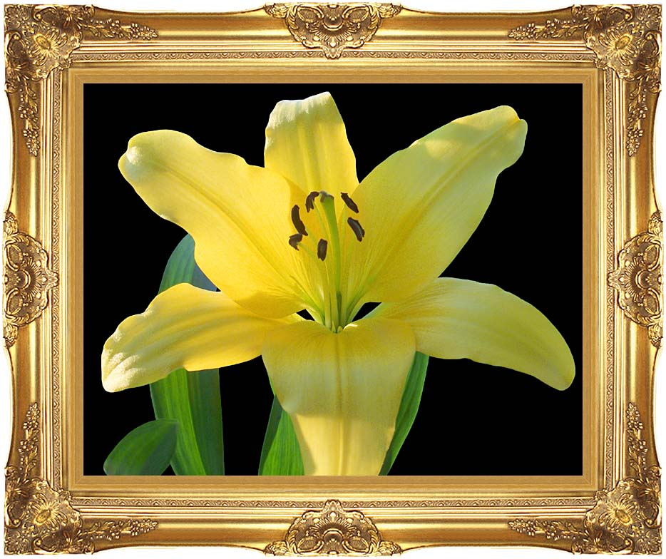 Brandie Newmon Yellow Lily Flower with Majestic Gold Frame