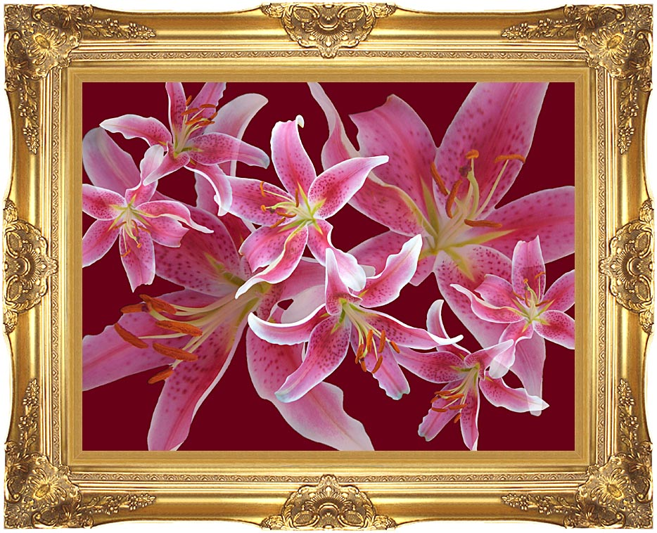 Brandie Newmon Stargazer Lily Flowers with Majestic Gold Frame