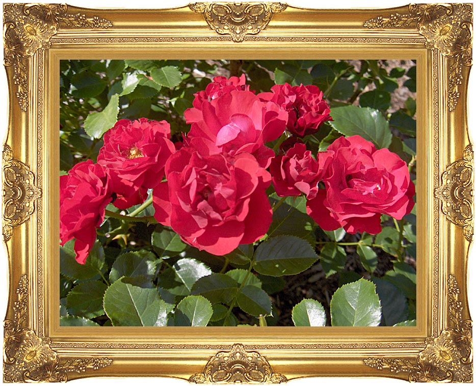 Brandie Newmon Blooming Red Roses with Majestic Gold Frame