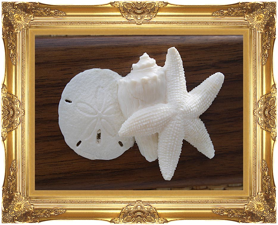 Kim O'Leary Photography Beach Ivory Starfish and Seashells with Majestic Gold Frame