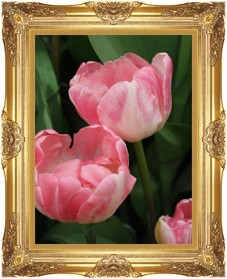 Kim O'Leary Photography Pink Tulips with Majestic Gold Frame
