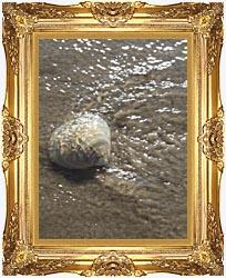 Seashell in the Ocean Framed Art