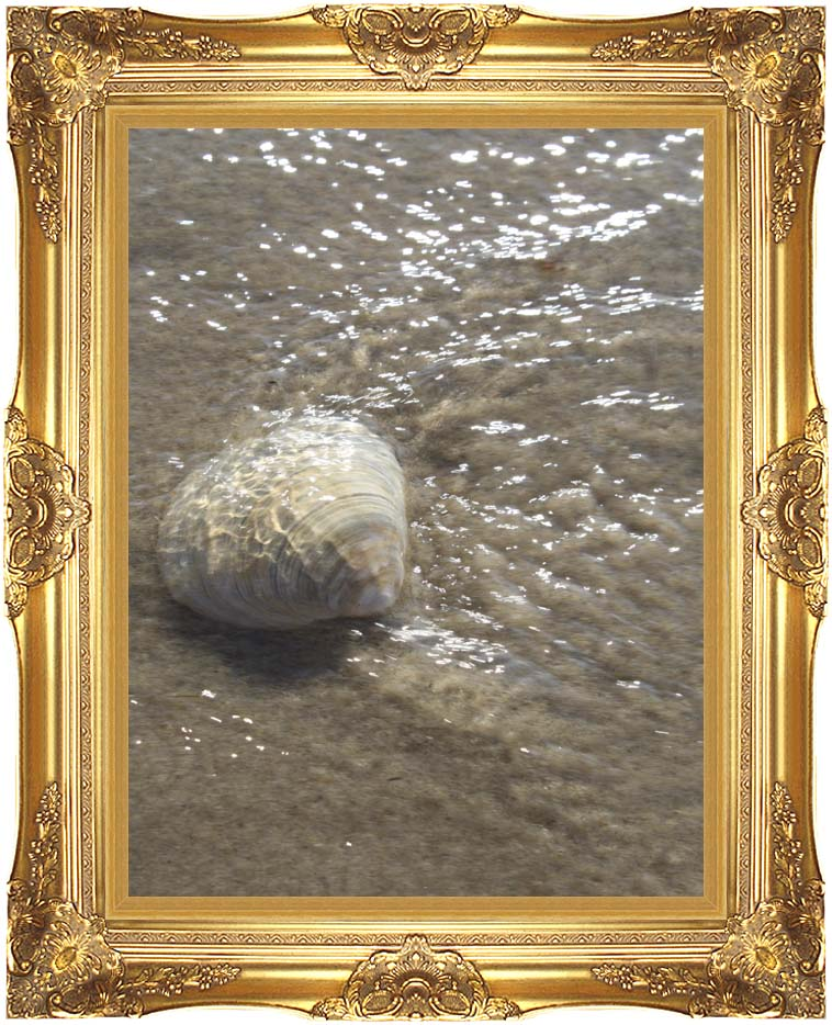 Kim O'Leary Photography Seashell in the Ocean with Majestic Gold Frame