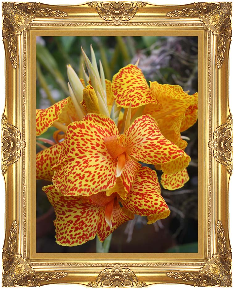 Kim O'Leary Photography Orange Flower with Majestic Gold Frame