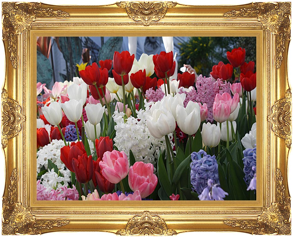 Kim O'Leary Photography Spring Tulips with Majestic Gold Frame