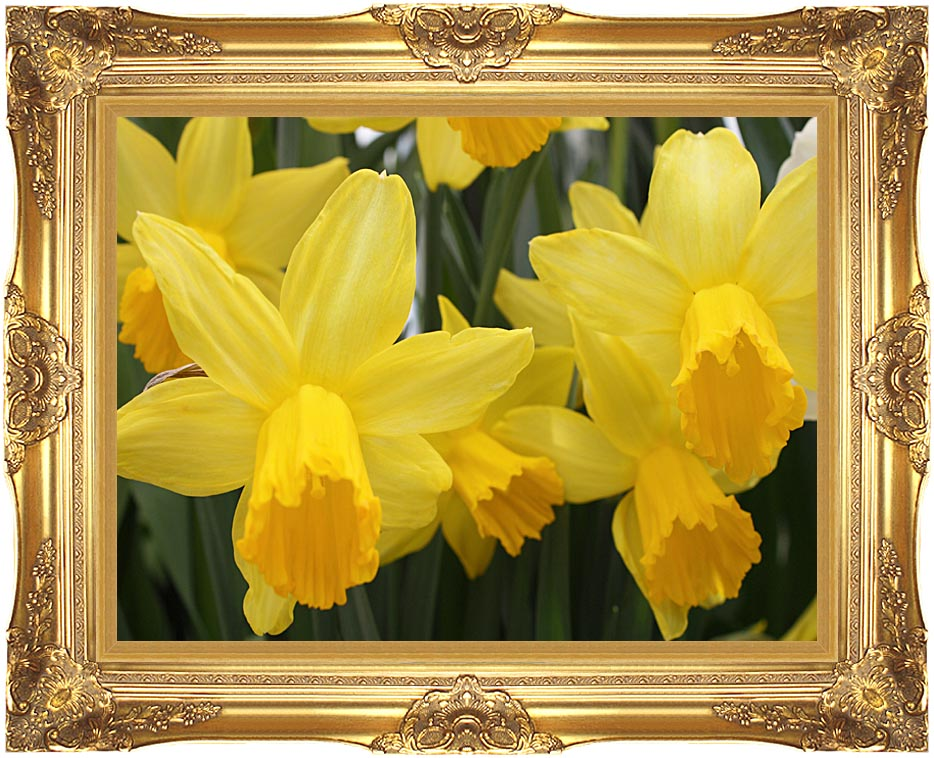Kim O'Leary Photography Yellow Daffoldils with Majestic Gold Frame