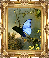 Martin Johnson Heade Blue Morpho Butterfly Canvas With Majestic Gold Frame