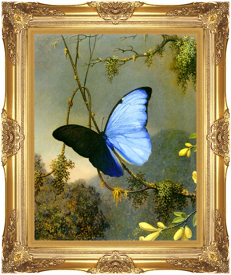 Martin Johnson Heade Blue Morpho Butterfly with Majestic Gold Frame