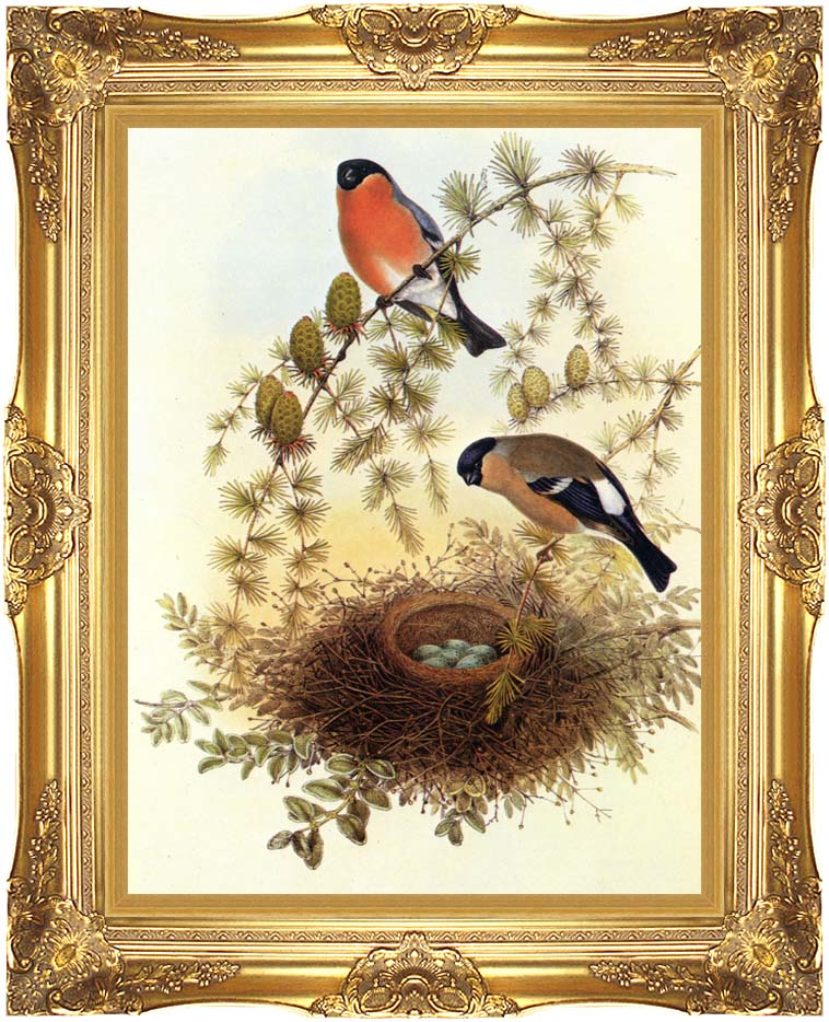 John Gould Bullfinch with Majestic Gold Frame