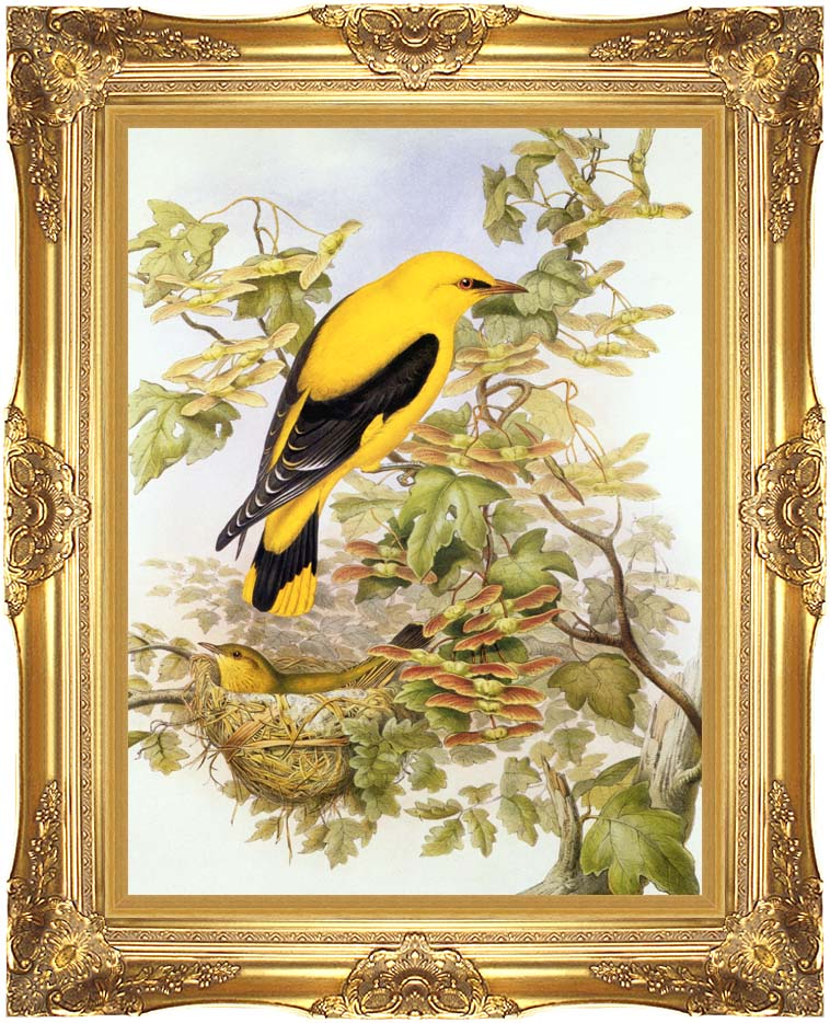 John Gould Golden Oriole with Majestic Gold Frame