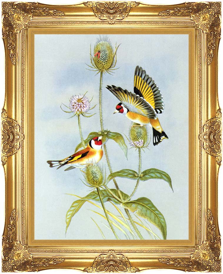 John Gould Goldfinch with Majestic Gold Frame