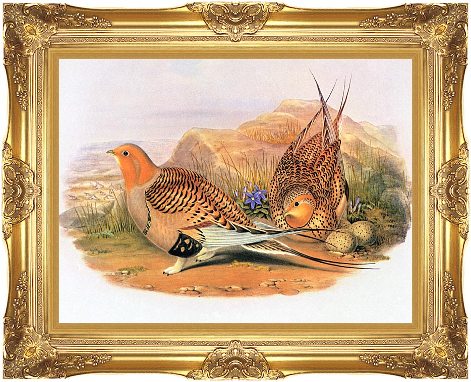 John Gould Pallas Sandgrouse with Majestic Gold Frame