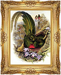 John Gould Quetzal canvas with Majestic Gold frame