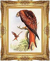 John Gould Red Kite canvas with Majestic Gold frame