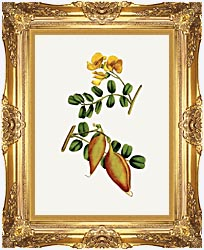 William Curtis Bladder Senna canvas with Majestic Gold frame