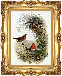 John Gould Robin canvas with Majestic Gold frame