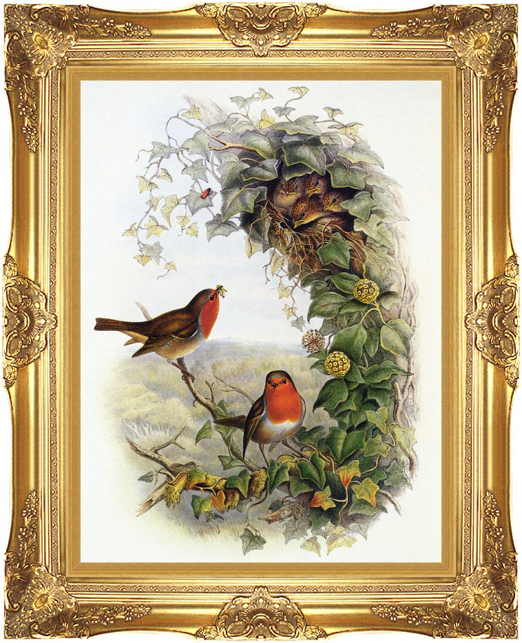 John Gould Robin with Majestic Gold Frame