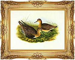 John Gould Ruff canvas with Majestic Gold frame