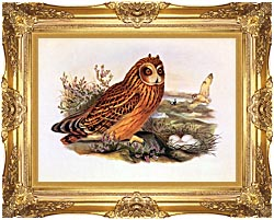 John Gould Short Eared Owl canvas with Majestic Gold frame