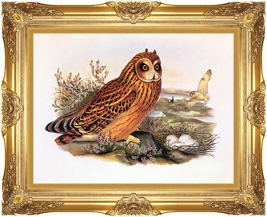 John Gould Short-Eared Owl with Majestic Gold Frame