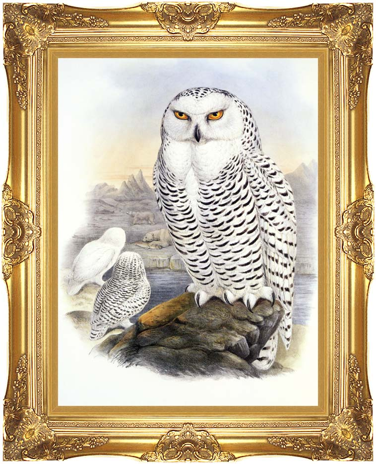 John Gould Snowy Owl with Majestic Gold Frame