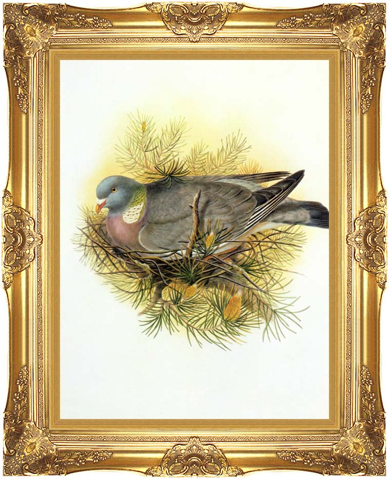John Gould Wood Pigeon with Majestic Gold Frame