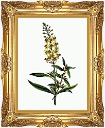 William Curtis Bulb Bearing Loosestrife canvas with Majestic Gold frame