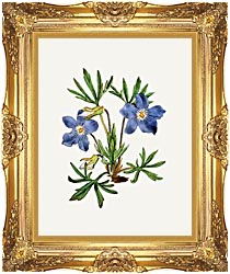 William Curtis Cut Leaved Violet canvas with Majestic Gold frame