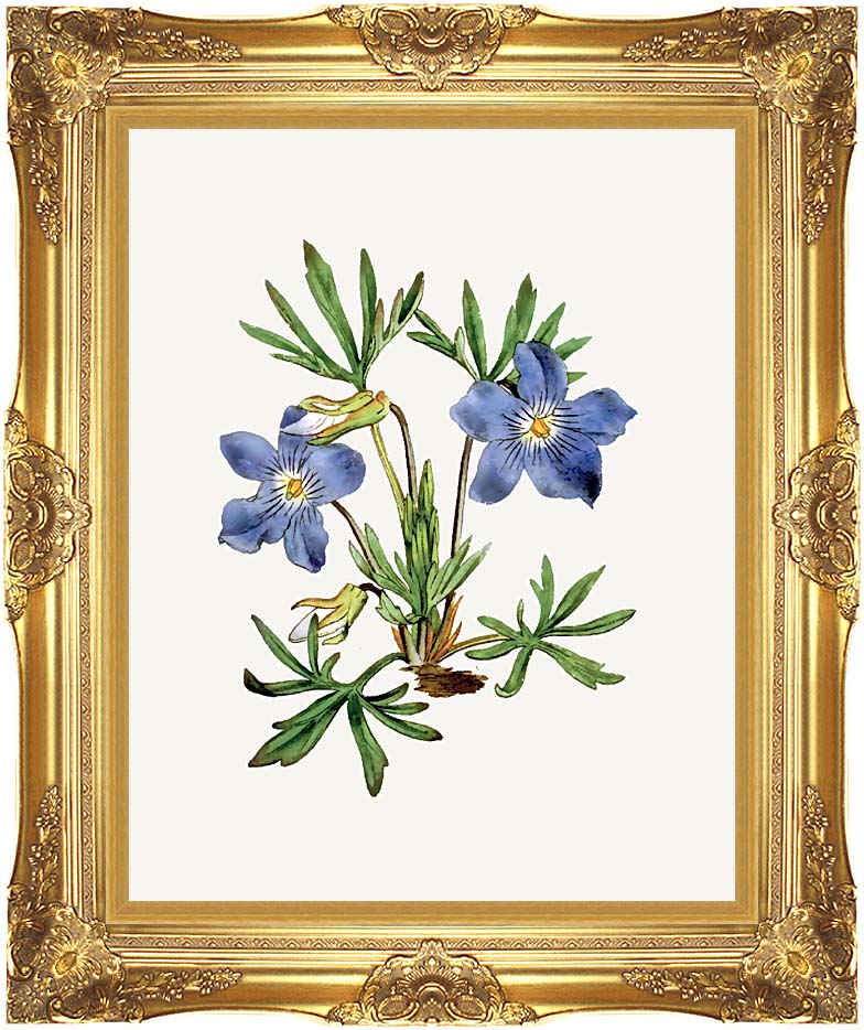 William Curtis Cut-Leaved Violet with Majestic Gold Frame