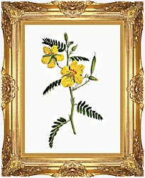 William Curtis Dwarf Cassia canvas with Majestic Gold frame