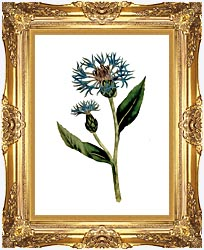 William Curtis Greater Blue Bottle canvas with Majestic Gold frame