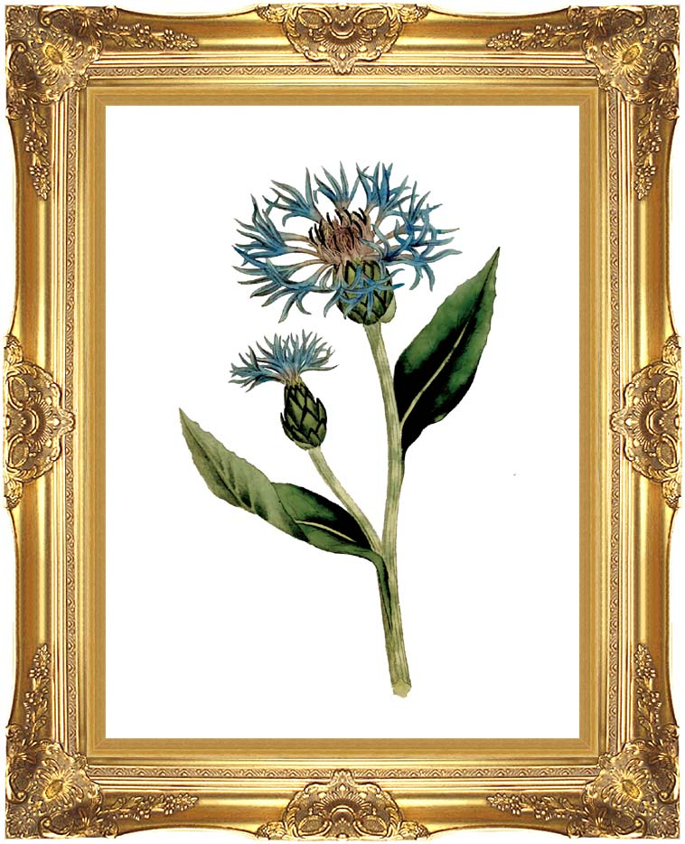William Curtis Greater Blue Bottle with Majestic Gold Frame